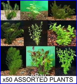 X50 Assorted Live Plants MIX Med Lrg Freshwater Fish Tank Free Shipping